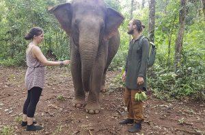 leguanos begegnen Elefanten im Cat Tien National Park